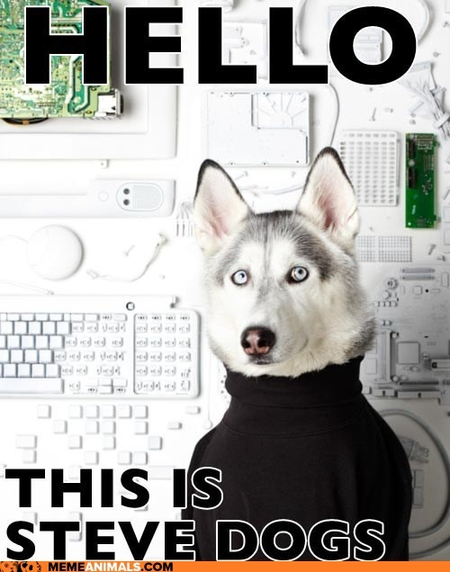 Steve Dogs!: Canin Chronicles, Siberian Husky, Pet, Stevejob, Smile, Funnies Stuff, Steve Job, Animal, Steve Dogs