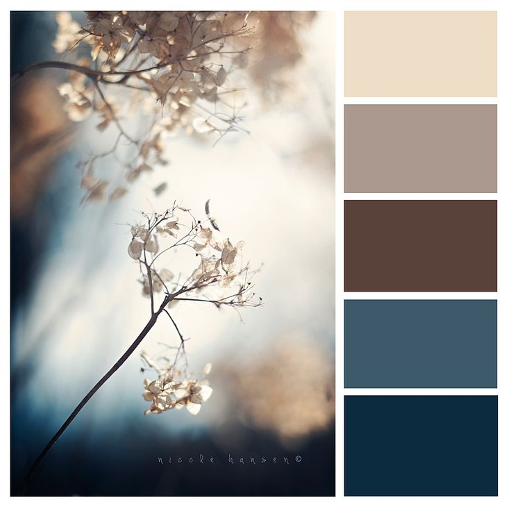 lightest is wall color, browns are couch color and blues can be decor and/or pillows