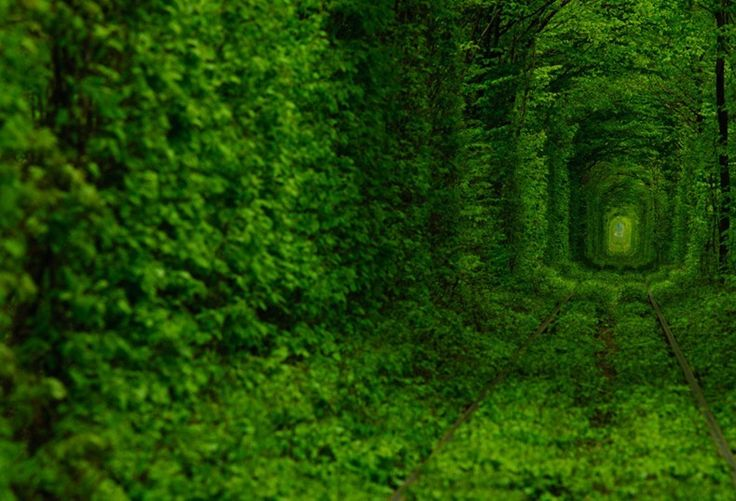 Kleven, Ukraine: Environment Art, Trees Tunnel, Ukraine, Green, Love Is, Training Track, Place, Photo, Fairies Tales