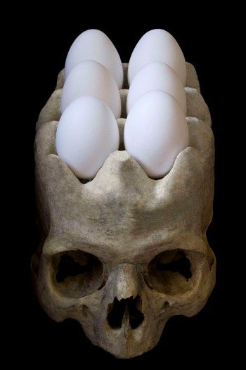 Skull egg holder...would love to hear the comments people would say when they open up the fridge and find this.