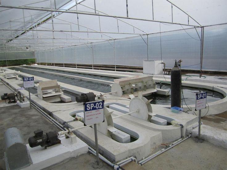 Raceway pond two 1m2 concrete frp lined raceway ponds for Aquaponics aeration