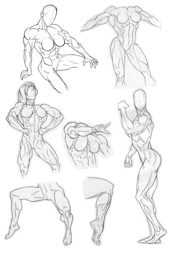 36 best Anatomical sketches images on Pinterest | Human anatomy ...