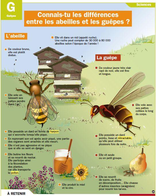 Connais-tu les différences entre les abeilles et les guêpes ?
