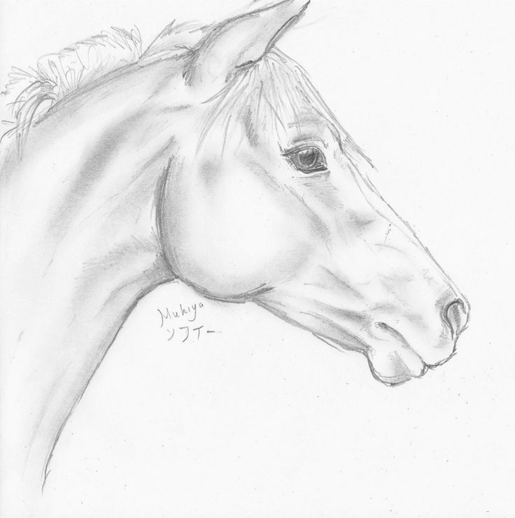 horse head sketch by | horse head sketch by mukiya traditional art drawings animals 2010 2013 ...