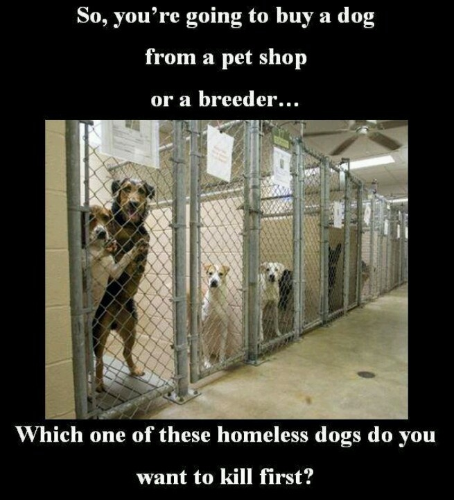 Research paper: Finally done! Adopting vs. buying dogs at the pet store?