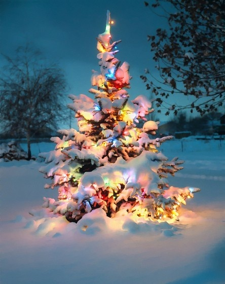Beautiful outdoor Christmas Tree all lit up, a typical Wisconsin countryside scene