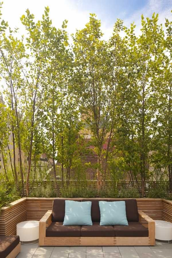 modern privacy screens trees patio landscape ideas outdoor sofa
