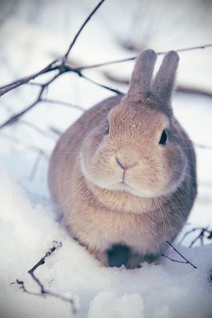 this kinda looks like my chubby muffin mittsy :P except mittsy has a pretty redish coat!!!
