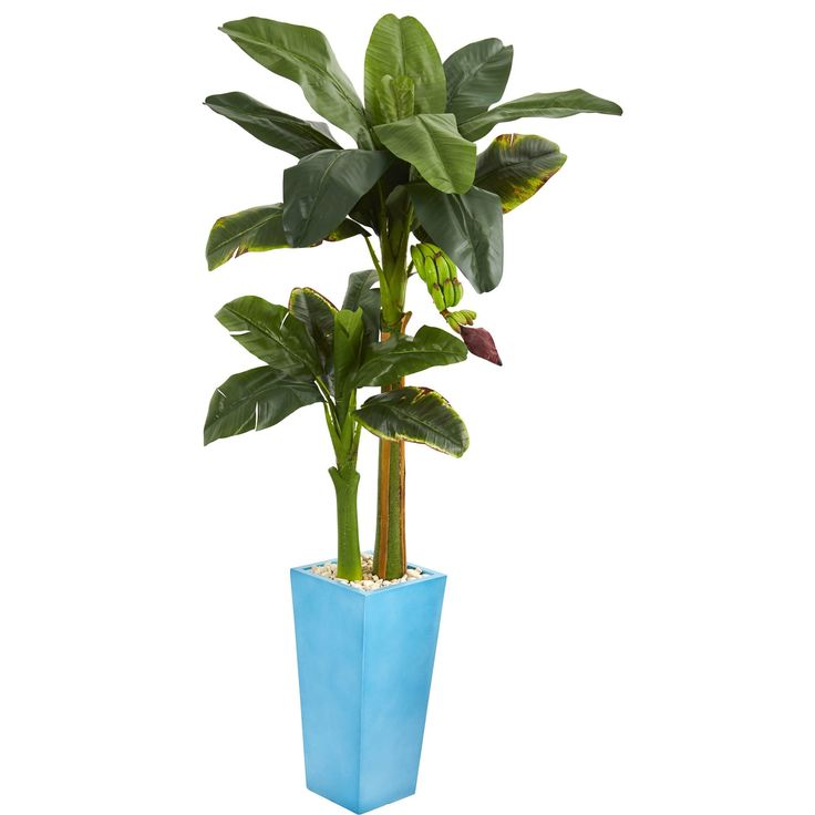 Nearly 5.5' Banana Artificial Tree in Tower Vase