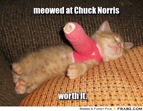 Celebrate Chuck Norris' 75th birthday with some memes - Star2.com
