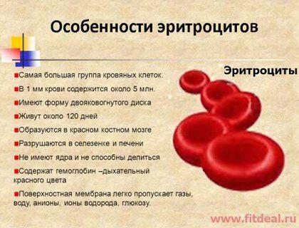 Причины анемии в подробностях
