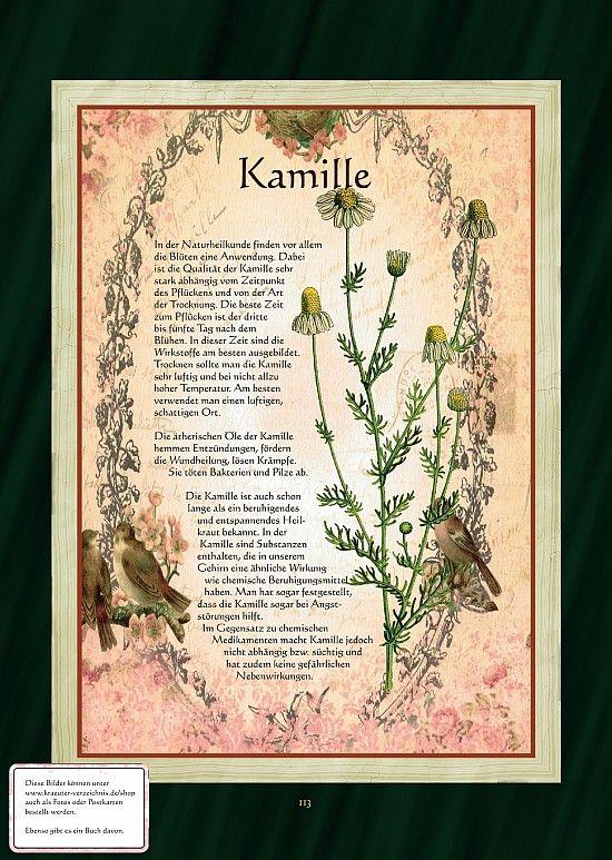Kamille - Kamillentee