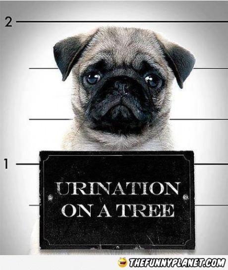 Dog Criminal.