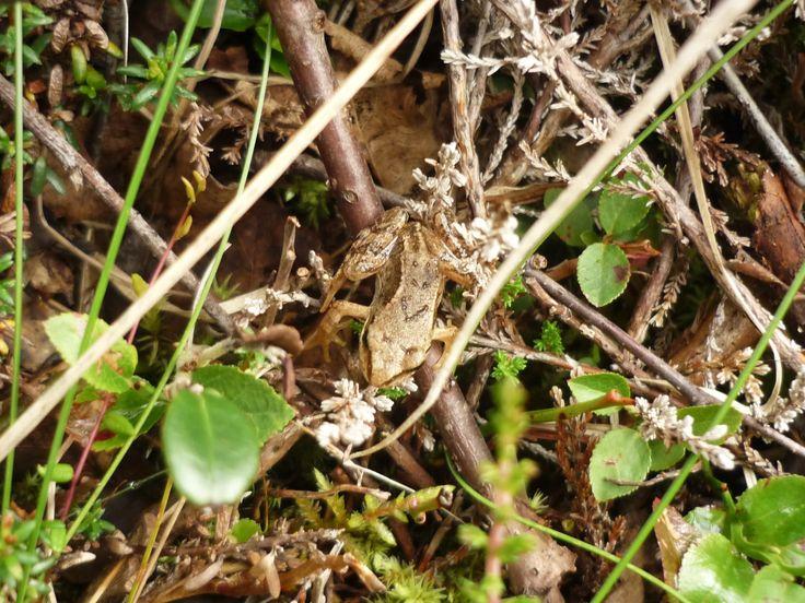 Photo of little frog made in the Arkhangelsk Region  https://www.etsy.com/shop/FoxberryForest http://anastasia-foxberry.deviantart.com/ http://www.livemaster.ru/foxberry-forest