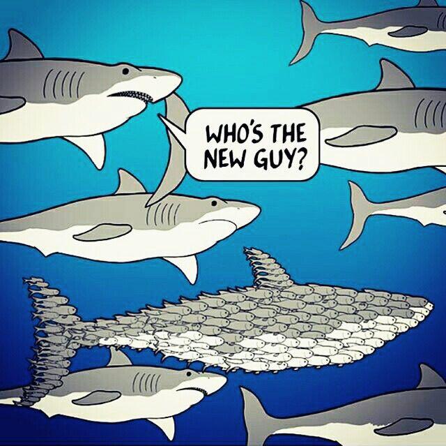 I'm terrified of sharks. http://ift.tt/2kdLDdM