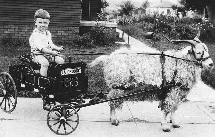 A traveling photographer back in the mid 1920's used to go door to door taking and selling pics of kids in his cart pulled by a great looking goat!
