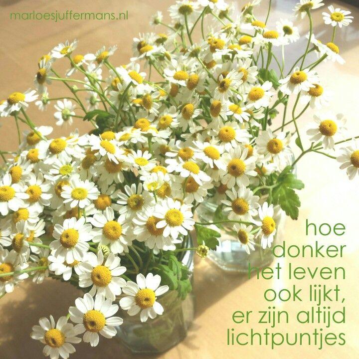 #Lichtpuntje van week #23:  iets leuks doen met een restje bloemen.  Wat was jouw #lichtpuntje van de week?  Voor meer #lichtpuntjes zie: http://www.marloesjuffermans.nl