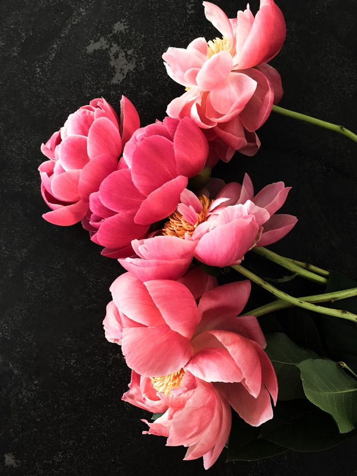 Every Spring my heart beats a little faster while a await Peony season. I love love these little treasures and am so disappointed that they are not compatible