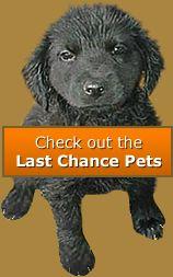 Last Chance Pets