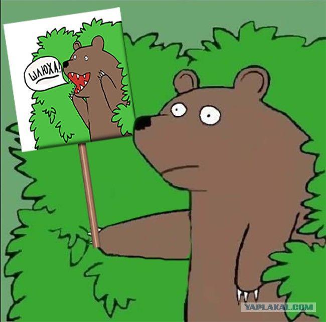 размещения пациентов медведь уходящий в кусты картинка таким забавным