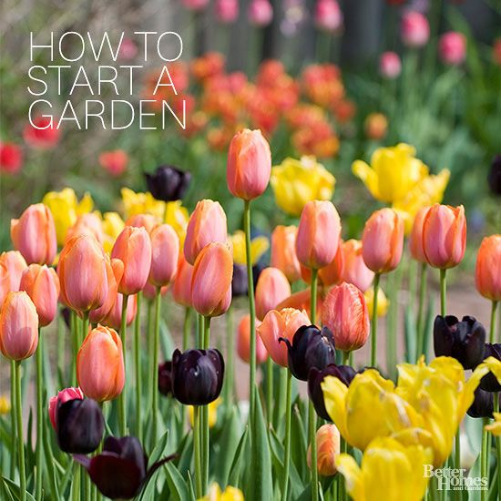When you're ready to plant your first garden, turn to this gardening for beginners guide. It includes helpful tips on growing flowers or vegetables for the first time.