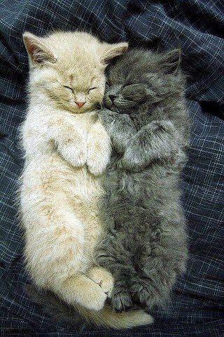 FACEBOOK: https://www.facebook.com/KittensLoveForever/ YOUTUBE CHANNEL: https://www.youtube.com/user/TheFederic777 PINTEREST: http://es.pinterest.com/fredalb/ BLOG: http://look-how-cute-kittens-2.blogspot.com/ BLOG: http://make-dogs-be-happy.blogspot.com/