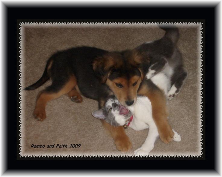Rambo and his adoptive, cat, mom, Faith