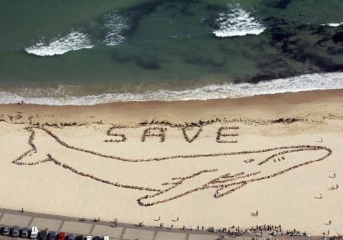 Save the Whales..1000's of people standing side by side to make this picture