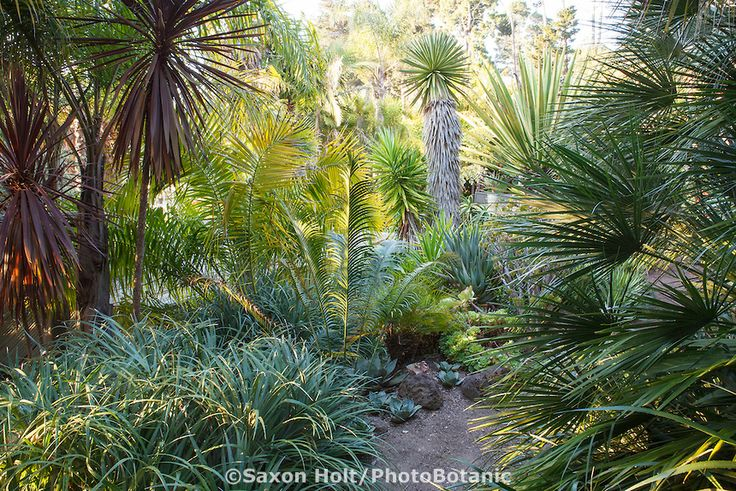 Dirt Path In Tropical Foliage California Garden With