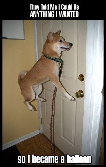 haha balloon dog
