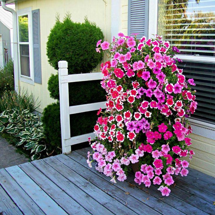 Φτιάξε τον δικό σου πύργο από λουλούδια!  #DIYκηπου #DIYμπαλκονιου #DIYπυργοςαπολουλουδια #ανοιξιατικαφυτα #ιδεεςγιακηπο #ιδεεςκηπου #κήπος #κηποςμελουλουδια #κηπουρικη #λουλουδια #μπαλκονι #πυργοςαπολουλουδια #φθινοπωριναφυτα