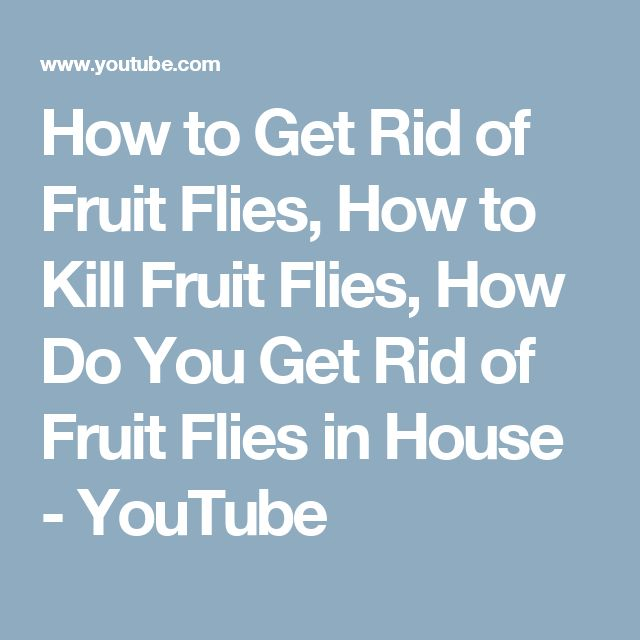 How to Get Rid of Fruit Flies, How to Kill Fruit Flies, How Do You Get Rid of Fruit Flies in House - YouTube