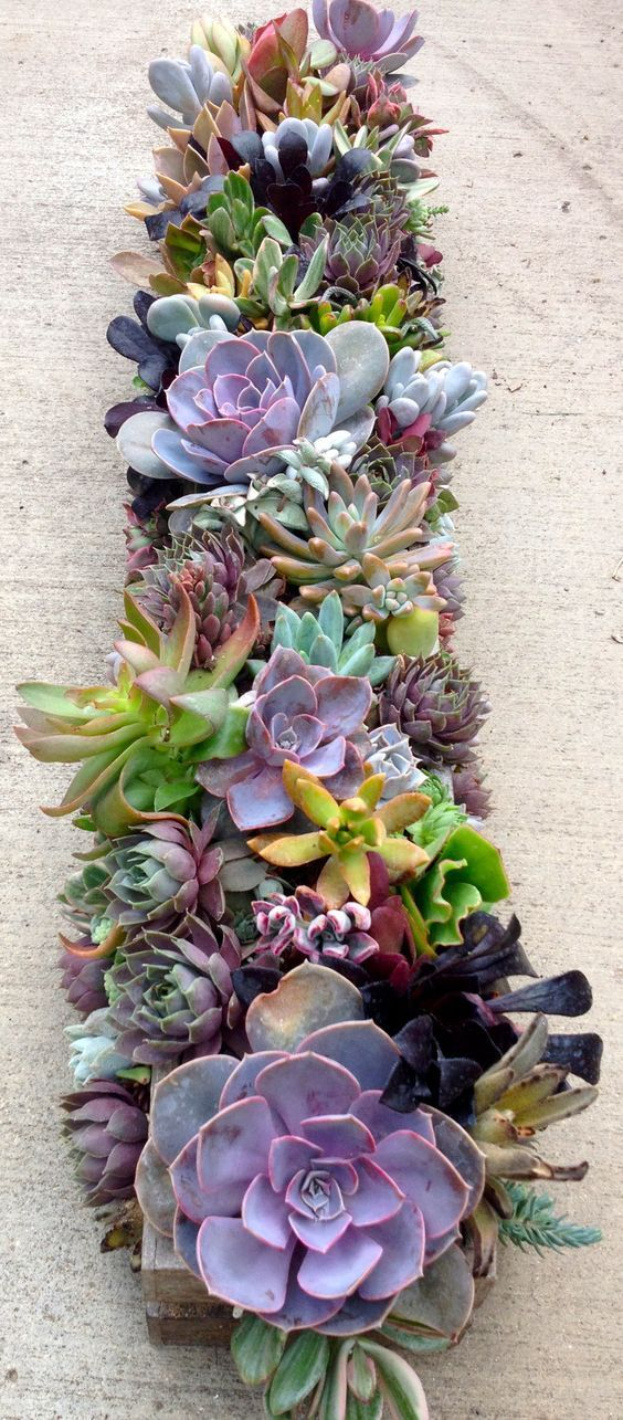 Succulent centerpieces via http://haydenregina.com/planted?image#0?image#0 || Recreate this succulent wedding centerpiece with faux succulents from http://Afloral.com!