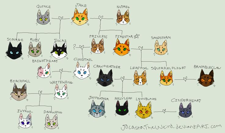 Sandstorm and Tigerstar are cousins! Because Sandstorm's father is Redtail, who's sisters are Spottedleaf, Willowpelt and Leopardfoot. Leopardfoot is Tigerstar's mother. Therefore, Sand and Tiger are cousins. Which means Brambleclaw and Squirrelflight are cousins too o.o