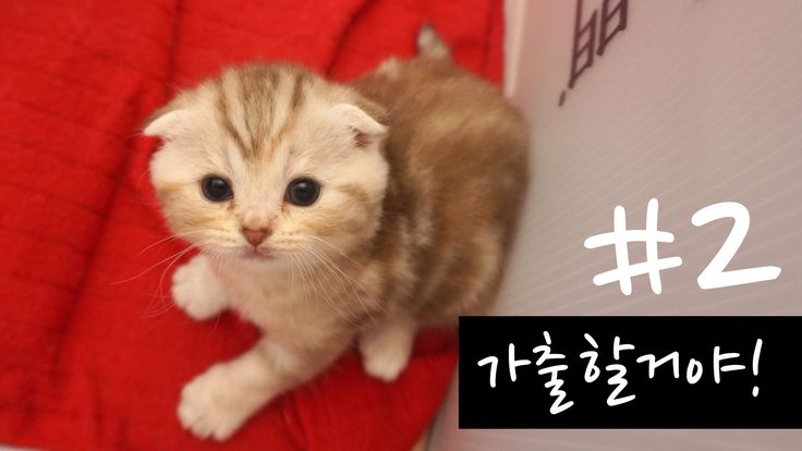 [Suri&Noel cat story] EP6 - 가출할 거야2  ( I will run away from home!!)