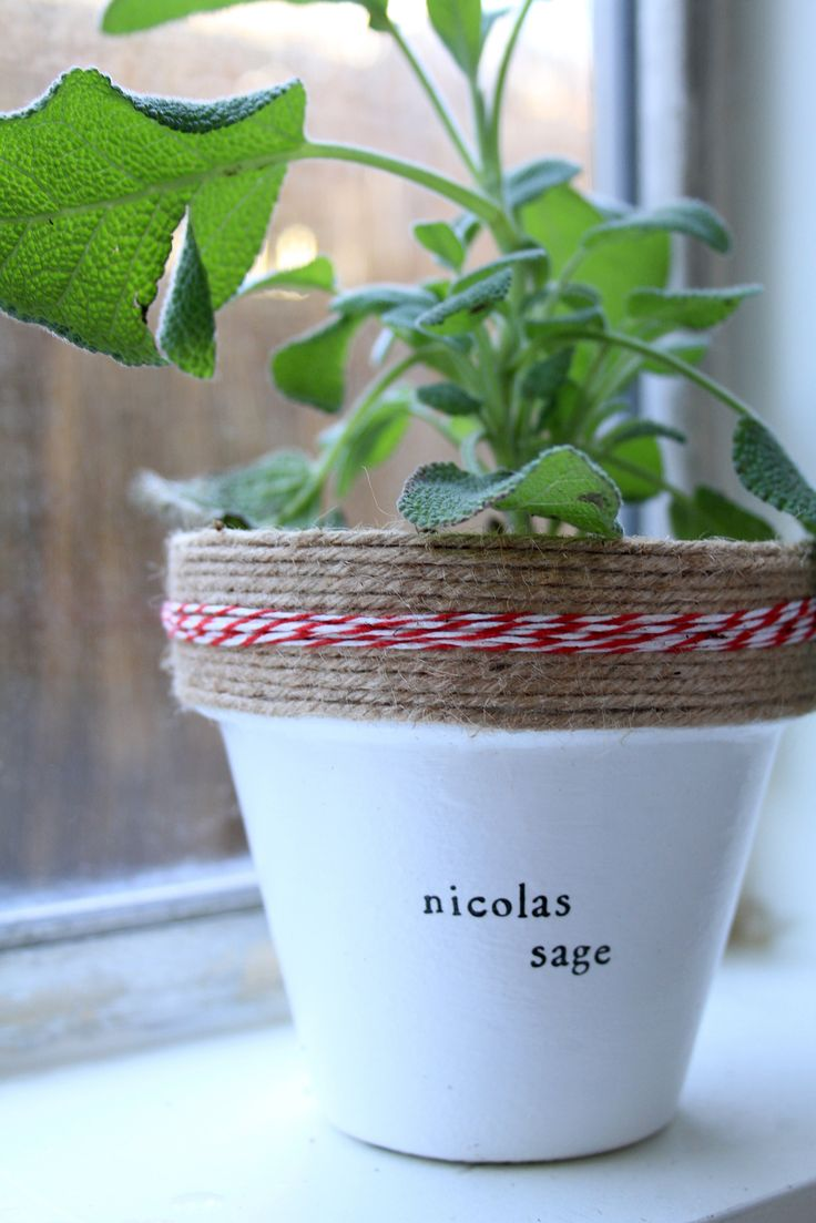 how to prepare a pot to plant
