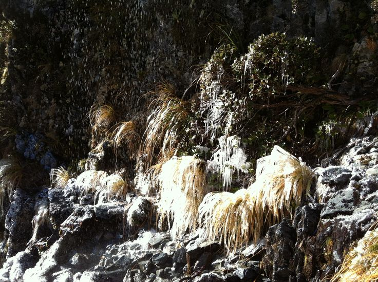 Tussock icecles