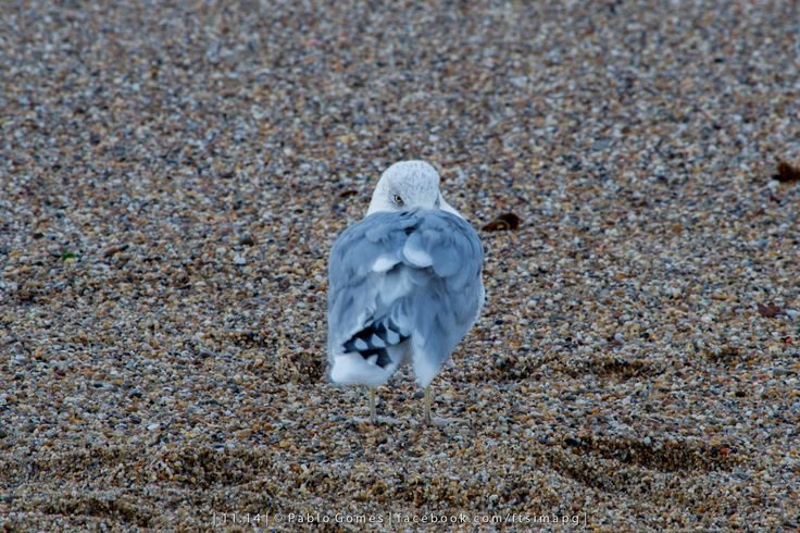 [2014 - Porto / Oporto - Portugal] #fotografia #fotografias #photography #foto #fotos #photo #photos #local #locais #locals #animal #animais #animales #animals #gaivota #gaviota #seagull #europa #europe