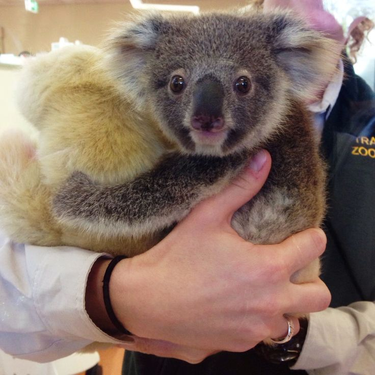 Patient Of The Week At Australia Zoo: 105 Best Images About The Australia Zoo On Pinterest