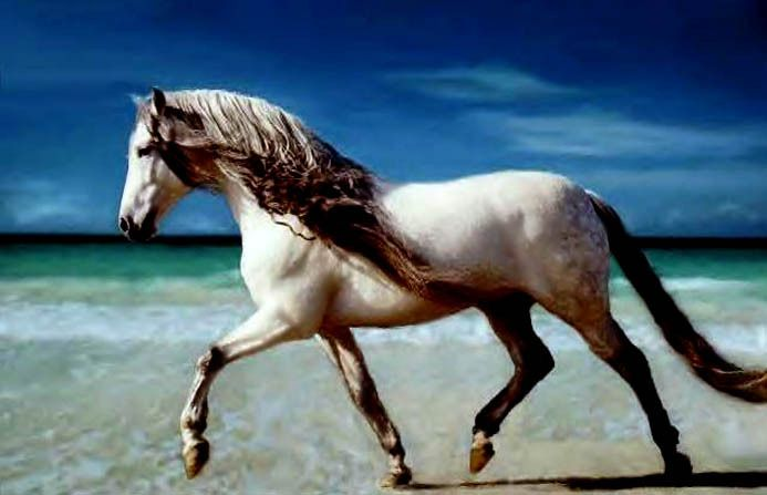 Andalusian gelding    Google Image Result for http://geld-up.com/wp-content/uploads/Andalusian.jpg