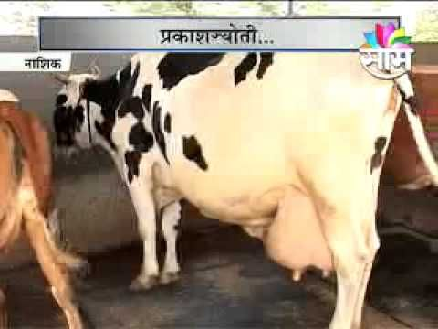 Women Empowerment:Nashik Base Women Success Story On Milk Business   YouTube