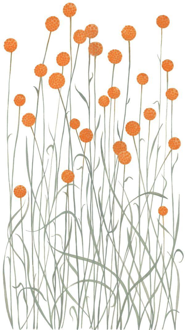 http://natalieryan.prosite.com/48525/450922/pattern-and-illustration/australian-native-flora