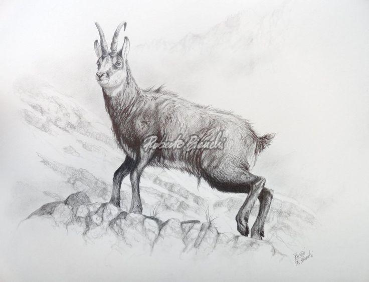Risultati immagini per pencil drawing setter