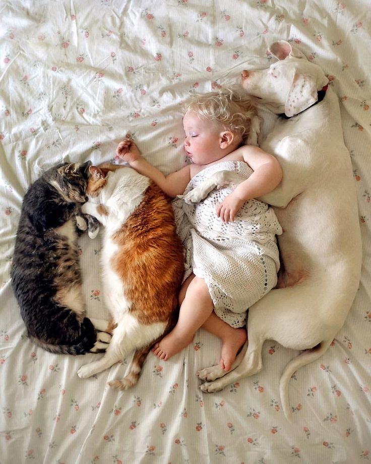 いいね!9,778件、コメント196件 ― Elizabeth Spenceさん(@wellettas)のInstagramアカウント: 「Choose love ❤ #whpdreambig . #rescuecadog #rescuecat #adoptdontshop . Fujifilm XT1」