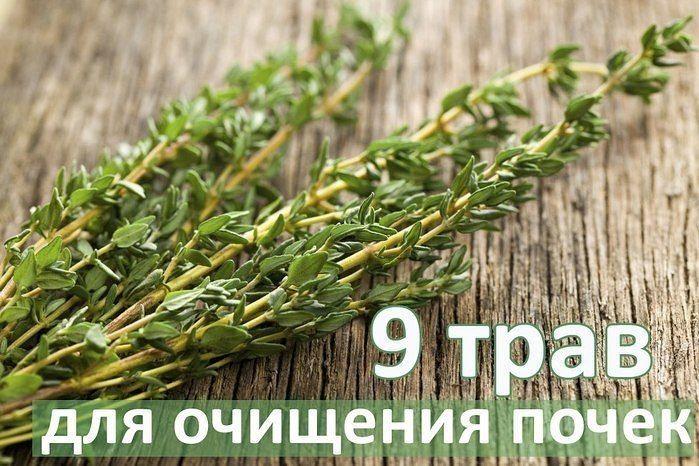 ТОП-9 ТРАВ ДЛЯ ОЧИЩЕНИЯ ПОЧЕК.
