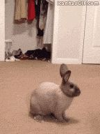 Bunny Binky…-CLICK ON IMAGE TWICE TO VIEW GIF