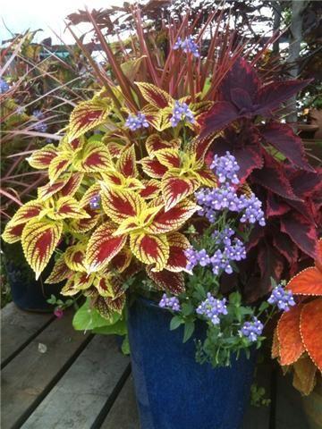 container: Modern Gardens, Gardens Ideas, Container Gardens, Design Gardens, Gardens Planters, Shades Plants, Gardens Design, Planters Ideas, Outdoor Planters