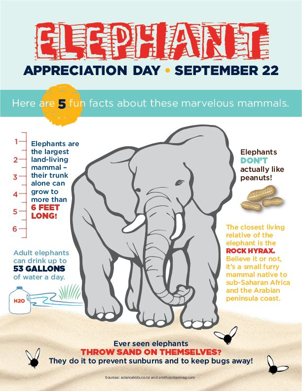 Fun Facts About Elephants for Elephant Appreciation Day - September 22nd