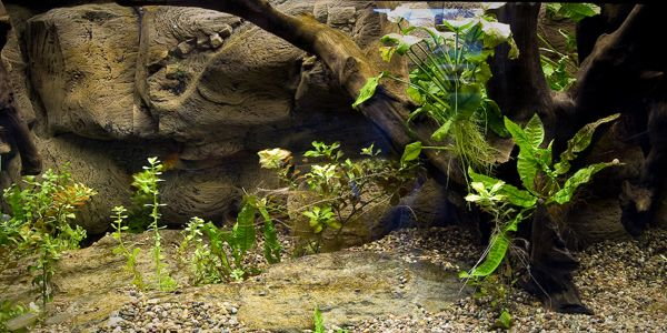 NotJustFish 3D Aquarium Backgrounds, Discus Fish for Sale