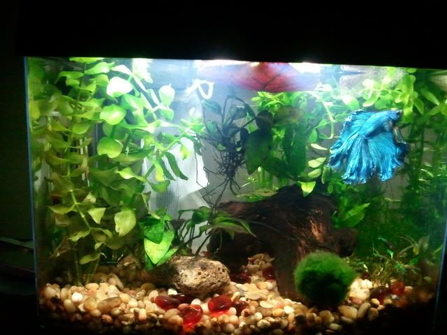 137 best something fishy images on pinterest for Betta fish care water